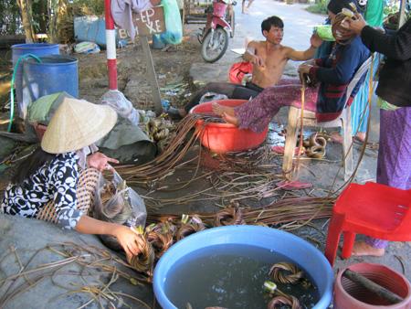 Nhà anh Tâm mỗi ngày mua lại từ 200 - 400 kg bông súng của người Campuchia