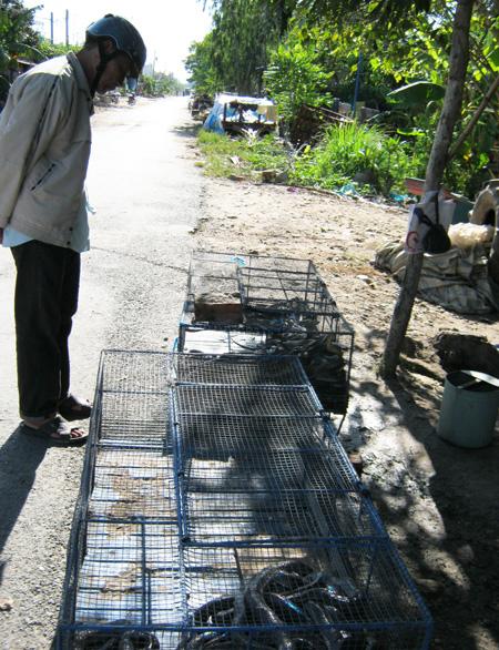 Điểm chợ này chuyên mua rắn, bán rắn, phân phối rắn