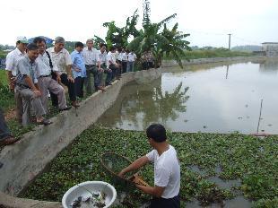 Hà Nội: Hoàn thiện kỹ thuật nuôi cua, chạch đồng trong ruộng lúa